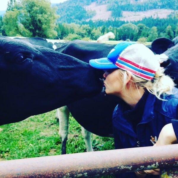 farmer kissing happy cows, D Dutchmen Dairy, Sicamous BC