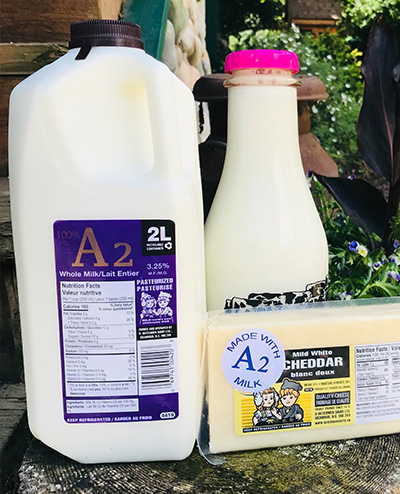 A2 Milk and cheese, D Dutchmen Dairy, Sicamous BC