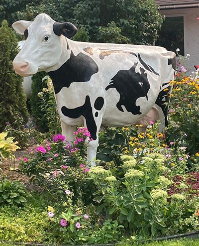 Cow sculpture, D Dutchmen Dairy, Sicamous BC